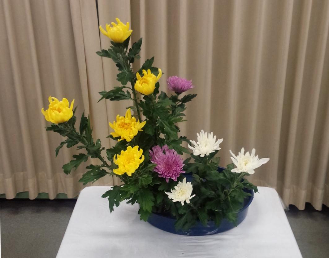 菊3種挿し